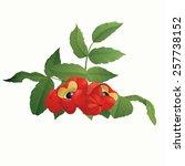 guarana berries  paullinia... | Shutterstock .eps vector #257738152
