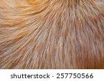 Hair Animal Color  It Is Hair...