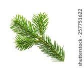 single fir branche arm on white ... | Shutterstock . vector #257751622
