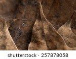 autumn leafs background   Shutterstock . vector #257878058