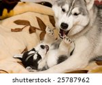 Stock photo dog with puppy 25787962
