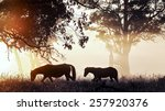 Small photo of Silhouette of a Brumby Mare and her Foal at first light.