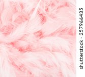 Pink Feather Background