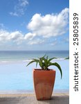 Plant in clay pot near pool and sea - stock photo
