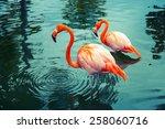 Two Pink Flamingos Walking In...