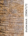 Coconut Skin Texture Of Bark