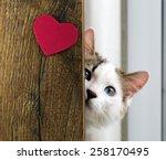 Stock photo cat 258170495