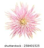 Stock photo flower isolated on white background 258401525