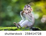 little baby monkey in monkey... | Shutterstock . vector #258414728