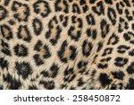 the leopard   panthera pardus   Shutterstock . vector #258450872
