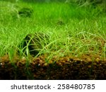 aquarium green nature | Shutterstock . vector #258480785