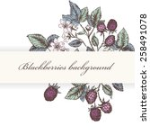 vintage flower and berry... | Shutterstock .eps vector #258491078
