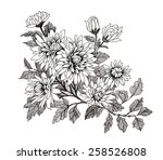 hand drawn garden flowers... | Shutterstock .eps vector #258526808