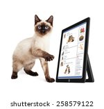 Stock photo cute kitten scrolling through a social media website on a tablet device 258579122