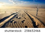 Dry Tree In The Sand Desert At...