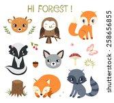woodland animals and decor... | Shutterstock . vector #258656855