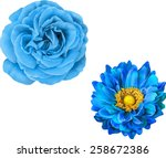 Blue Rose And Mona Lisa Flower...