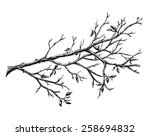 ink hand drawn branch  isolated ... | Shutterstock . vector #258694832