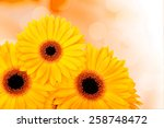orange gerber flowers on color... | Shutterstock . vector #258748472