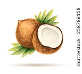 coconut  hand drawn watercolor  ... | Shutterstock .eps vector #258786158