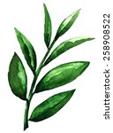 Watercolor Tea Green Leaves...