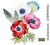 Watercolor  Flowers  Anemone ...