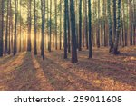 beautiful sunset in the woods ... | Shutterstock . vector #259011608