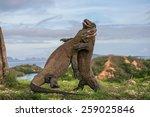 Two Komodo Dragon Fight With...