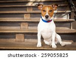 Jack Russell Terrier Dog Left...