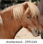 young pony posing in the sun | Shutterstock . vector #2591164