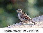 sparrow photo | Shutterstock . vector #259145645