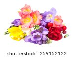 blooming freesia. isolated on... | Shutterstock . vector #259152122