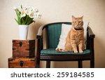 Home Interior  Cat Sitting In...