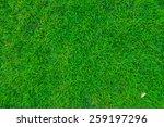 green grass. natural background ...   Shutterstock . vector #259197296