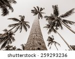 grayscale palm | Shutterstock . vector #259293236