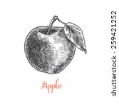 apple  vintage fruit | Shutterstock .eps vector #259421252