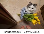 Stock photo cat with a bouquet at the feet of mistress 259429316