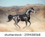 Black Arab Horse Running In...