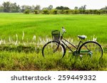 Old Bicycle In Paddy Field