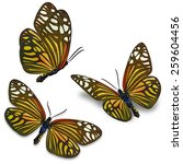 three yellow butterfly isolated ... | Shutterstock . vector #259604456