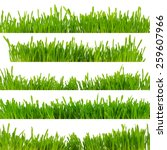 green grass | Shutterstock . vector #259607966