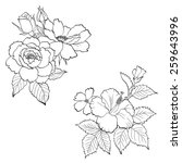 hand drawn roses and hibiscus... | Shutterstock .eps vector #259643996