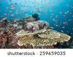 Tropical Fish  Corals And...