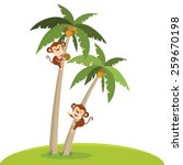 Monkeys Climbing Coconut Tree....