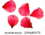 Stock photo petals on white background 259680575