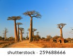 beautiful baobab trees at... | Shutterstock . vector #259688666