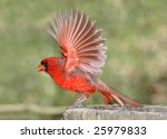 fully splayed wings in motion ... | Shutterstock . vector #25979833