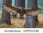 flying eurasian eagle owl with... | Shutterstock . vector #259951538