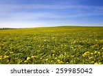 Field On Which Grows A Lot Of...