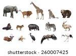 A Collage Of Wild Animals